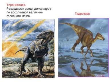 Тираннозавр. Рекордсмен среди динозавров по абсолютной величине головного моз...