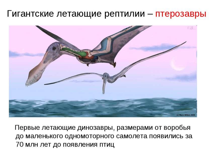 Гигантские летающие рептилии – птерозавры Первые летающие динозавры, размерам...