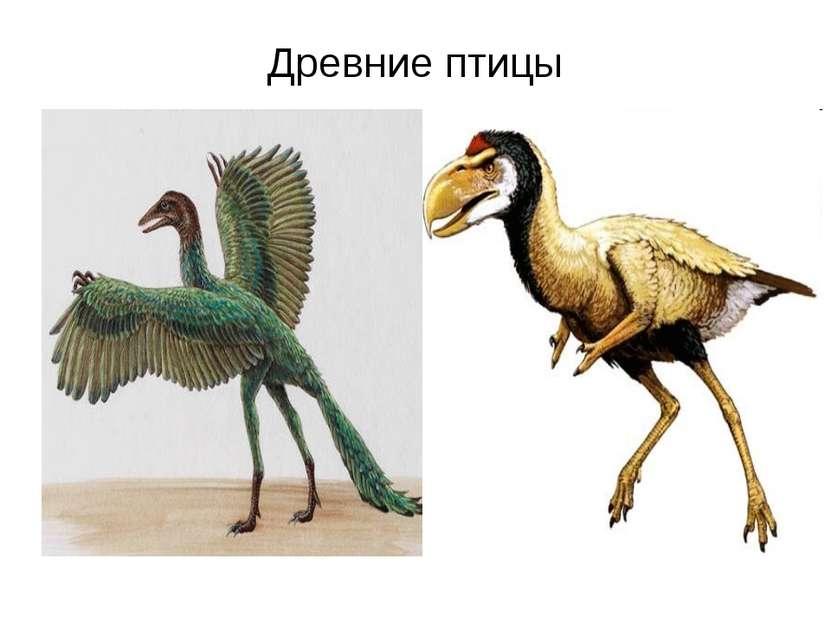 Древние птицы
