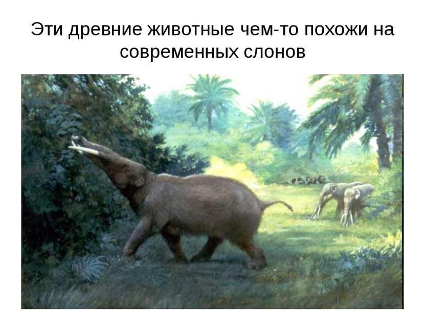 Эти древние животные чем-то похожи на современных слонов