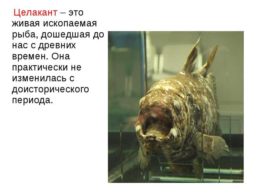 Целакант – это живая ископаемая рыба, дошедшая до нас с древних времен. Она п...
