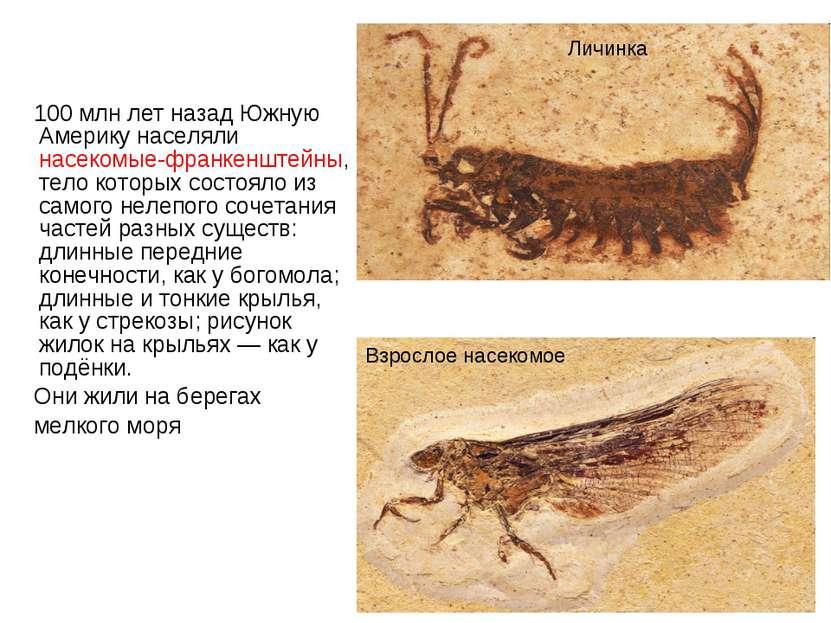 100 млн лет назад Южную Америку населяли насекомые-франкенштейны, тело которы...