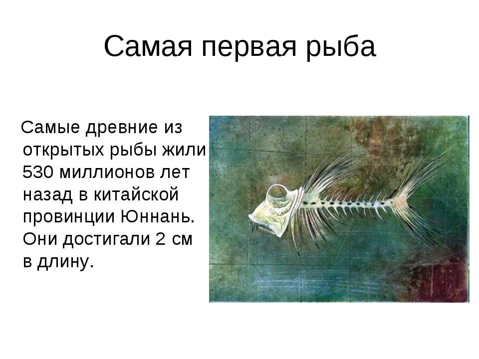 Самая первая рыба Самые древние из открытых рыбы жили 530 миллионов лет назад...