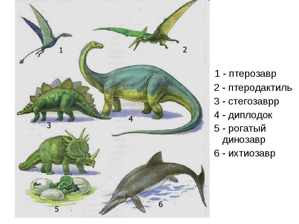 1 - птерозавр 2 - птеродактиль 3 - стегозаврр 4 - диплодок 5 - рогатый диноза...