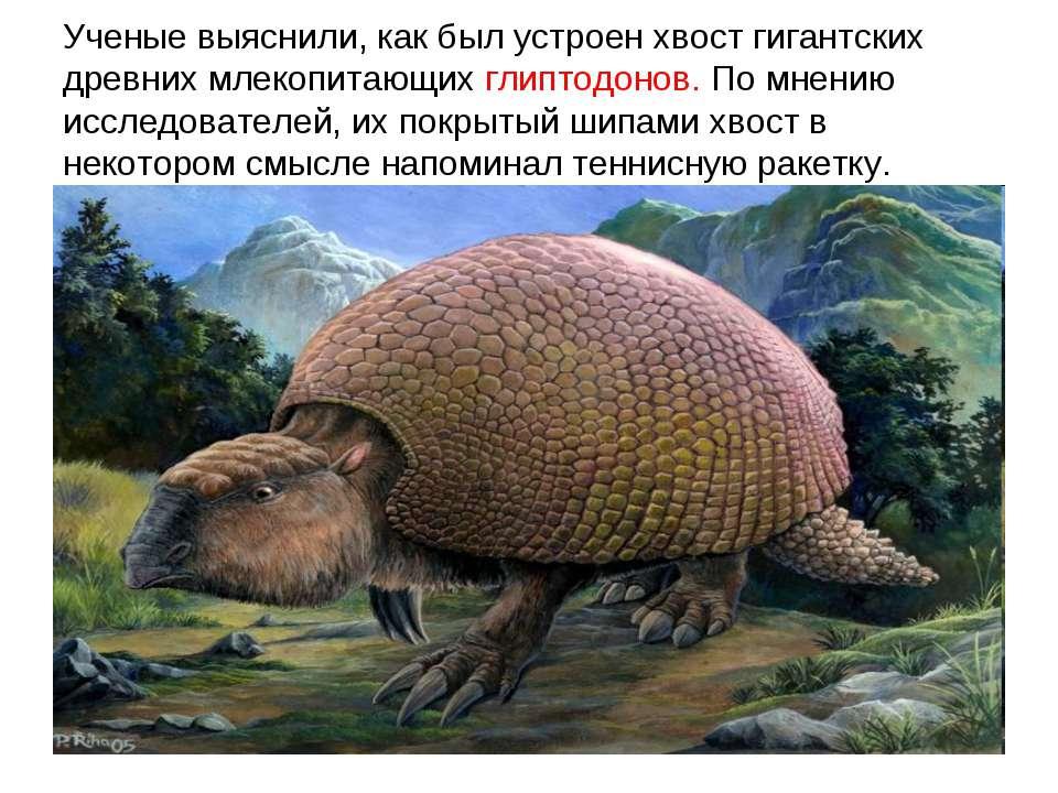 Ученые выяснили, как был устроен хвост гигантских древних млекопитающих глипт...