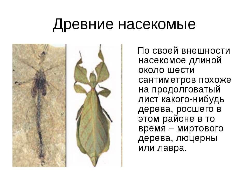 Древние насекомые По своей внешности насекомое длиной около шести сантиметров...
