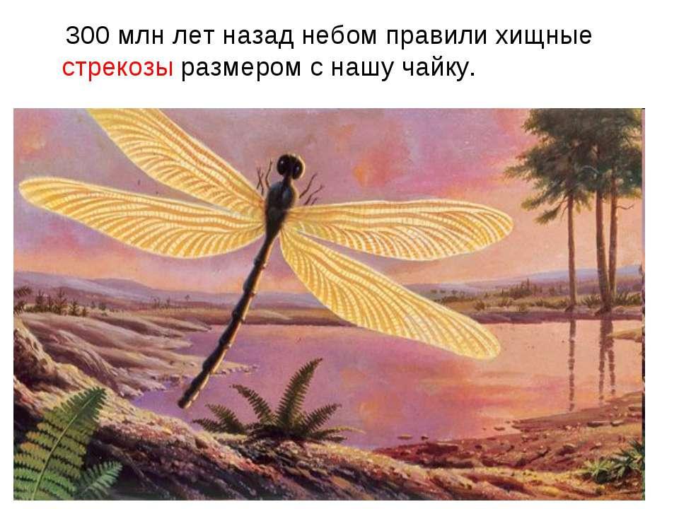 300 млн лет назад небом правили хищные стрекозы размером с нашу чайку.