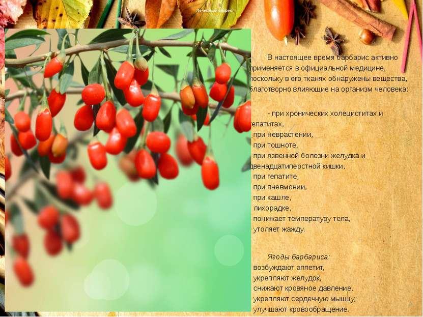 Лечебный эффект В настоящее время барбарис активно применяется в официальной ...