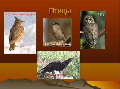 Птицы Степной орел Хохлатый жаворонок Пустынная славка Сова