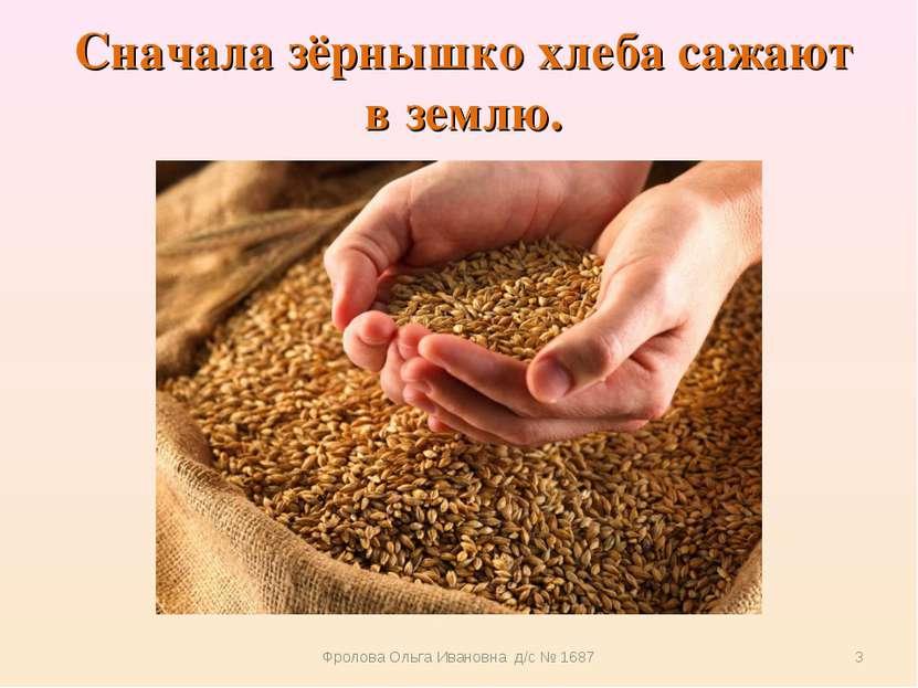 Сначала зёрнышко хлеба сажают в землю. Фролова Ольга Ивановна д/с № 1687 * Фр...