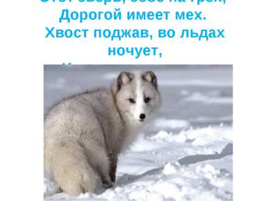 Этот зверь, себе на грех, Дорогой имеет мех. Хвост поджав, во льдах ночует, И...