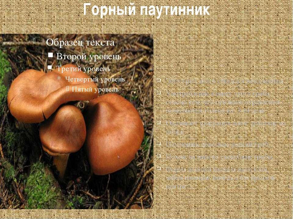 Горный паутинник Этот гриб долго считался неядовитым. Употребление в пищу это...