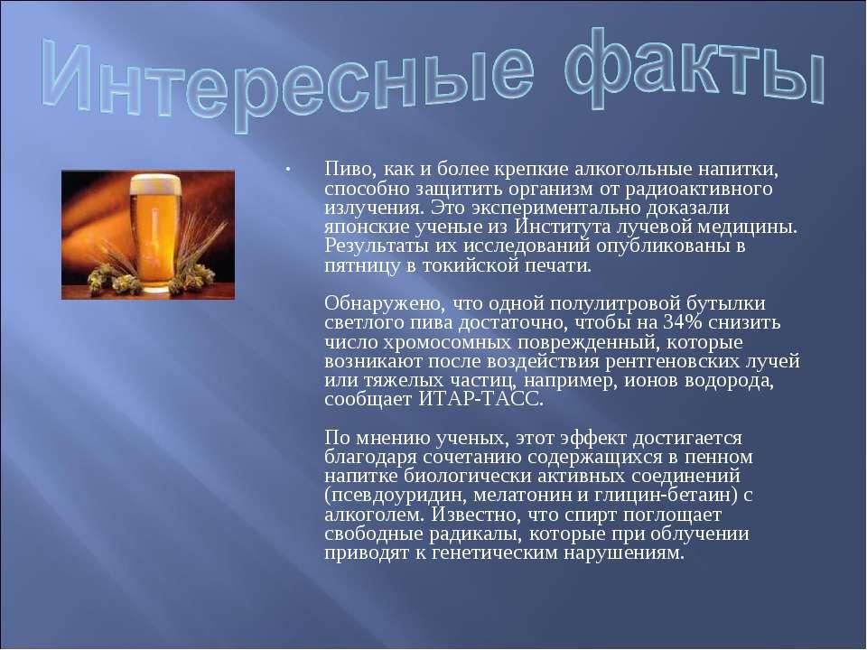 Пиво, как и более крепкие алкогольные напитки, способно защитить организм от ...