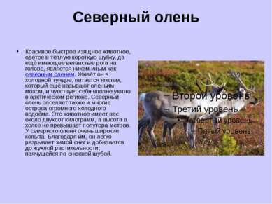 Северный олень Красивое быстрое изящное животное, одетое в тёплую короткую шу...