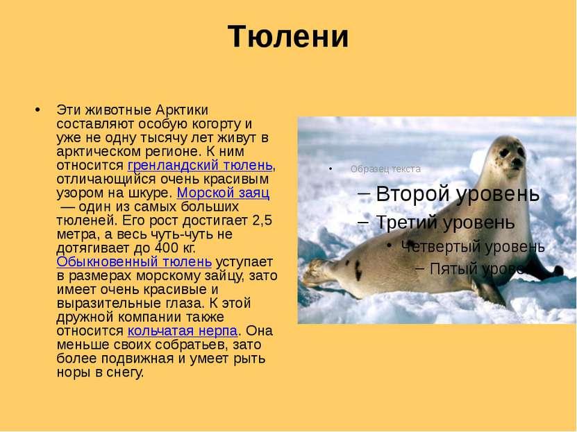 Тюлени Эти животные Арктики составляют особую когорту и уже не одну тысячу ле...