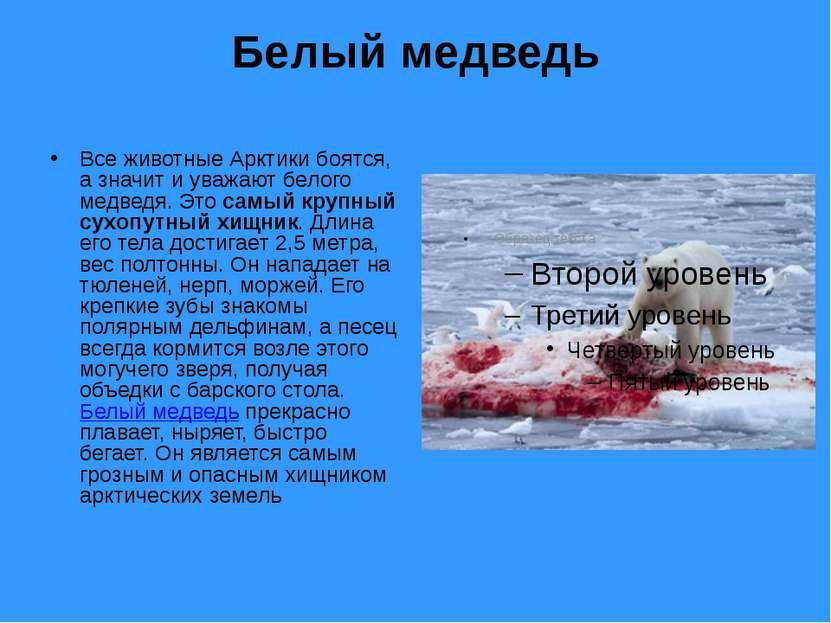 Белый медведь Все животные Арктики боятся, а значит и уважают белого медведя....