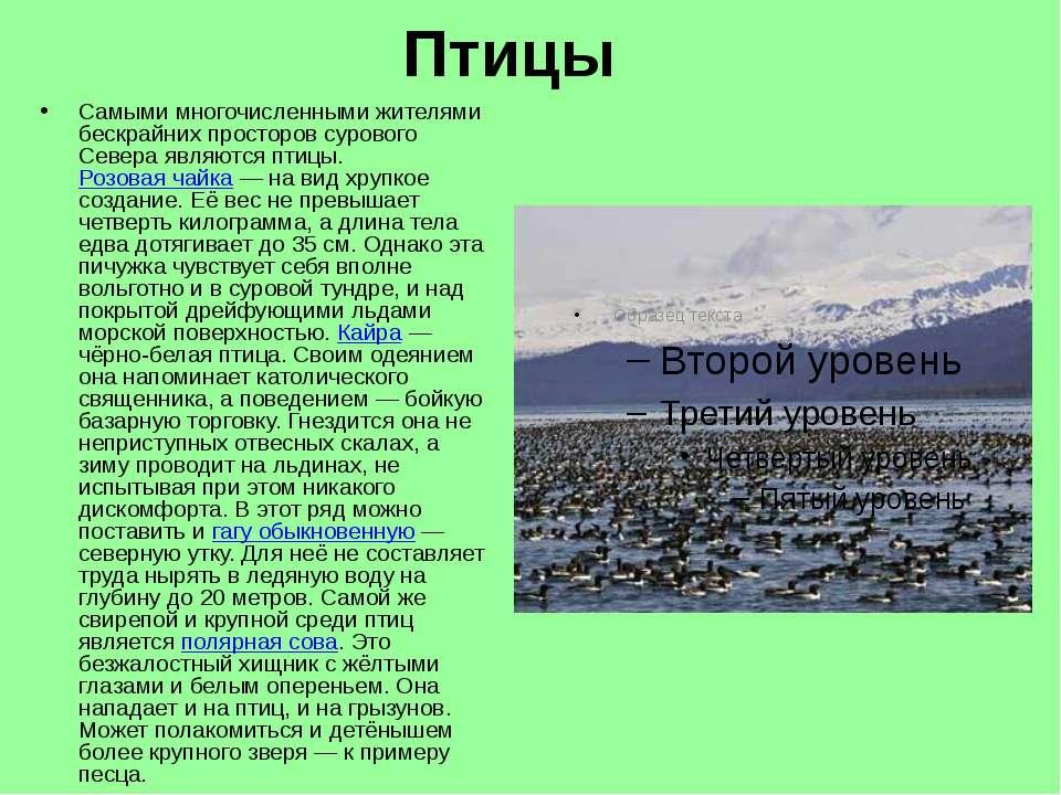 Птицы Самыми многочисленными жителями бескрайних просторов сурового Севера яв...