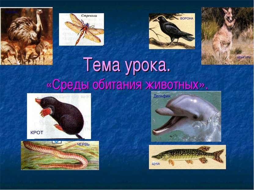 Тема урока. «Среды обитания животных».