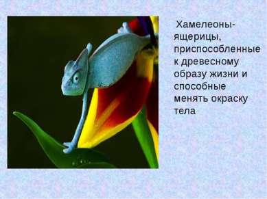 Хамелеоны- ящерицы, приспособленные к древесному образу жизни и способные мен...
