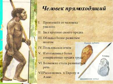 Человек прямоходящий Произошёл от человека умелого Был крупнее своего предка ...