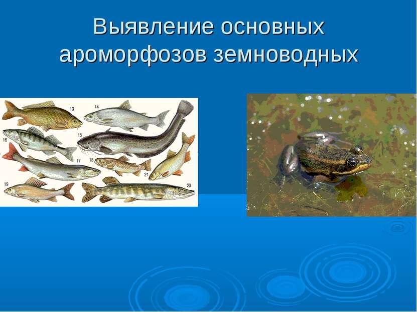 Выявление основных ароморфозов земноводных
