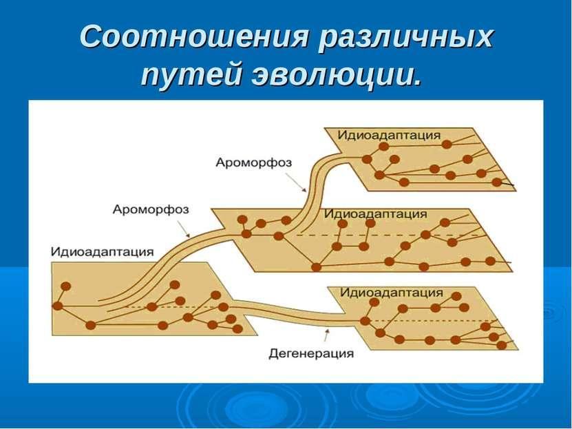 Соотношения различных путей эволюции.