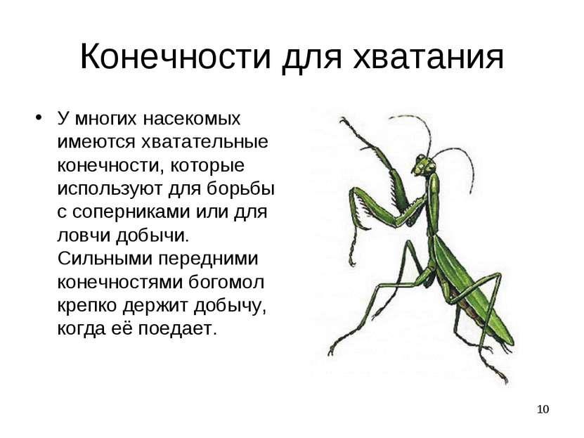 * Конечности для хватания У многих насекомых имеются хватательные конечности,...