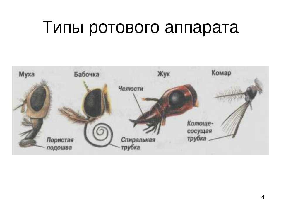 * Типы ротового аппарата