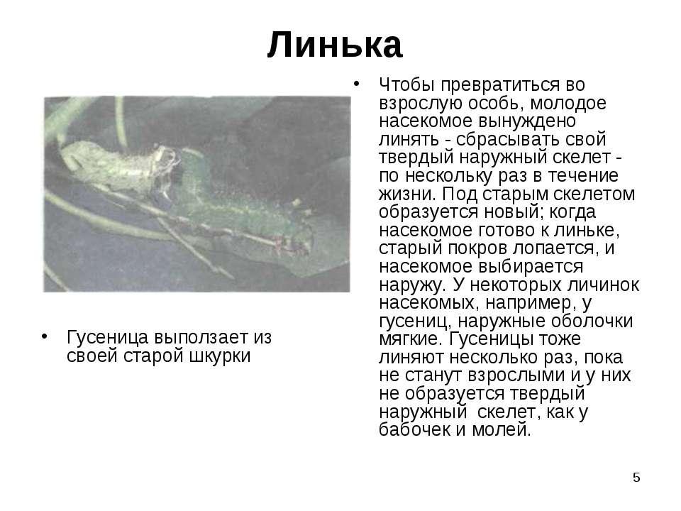 * Линька Гусеница выползает из своей старой шкурки Чтобы превратиться во взро...