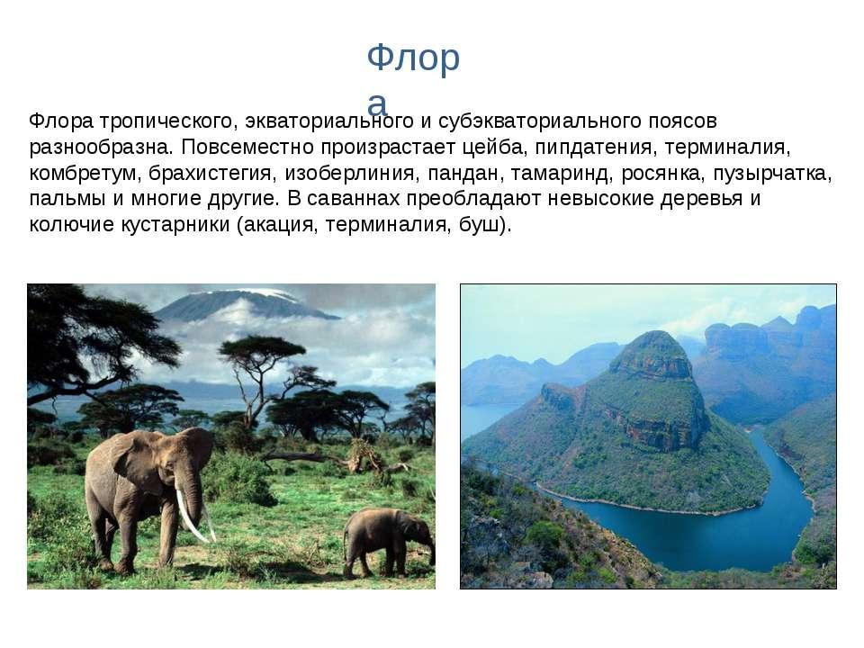 Флора тропического, экваториального и субэкваториального поясов разнообразна....