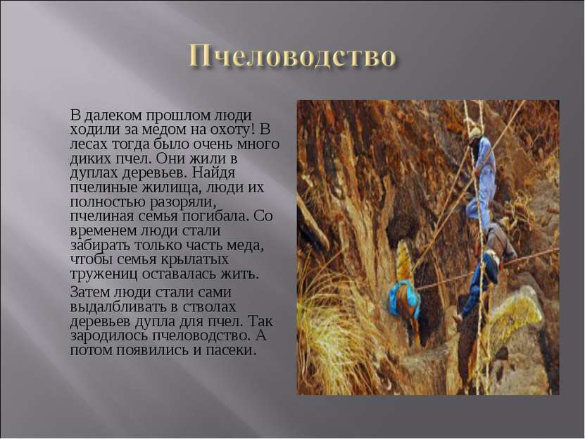 В далеком прошлом люди ходили за медом на охоту! В лесах тогда было очень мно...