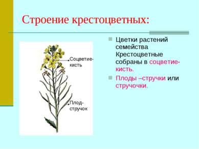 Строение крестоцветных: Цветки растений семейства Крестоцветные собраны в соц...