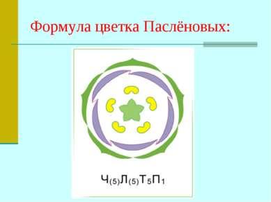 Формула цветка Паслёновых: