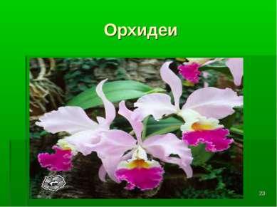 * Орхидеи