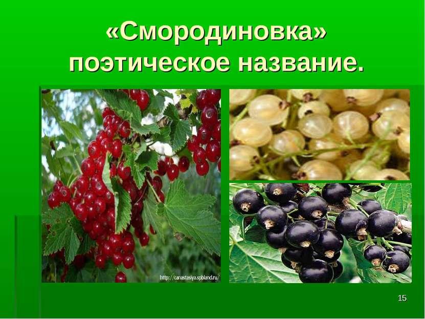 * «Смородиновка» поэтическое название.