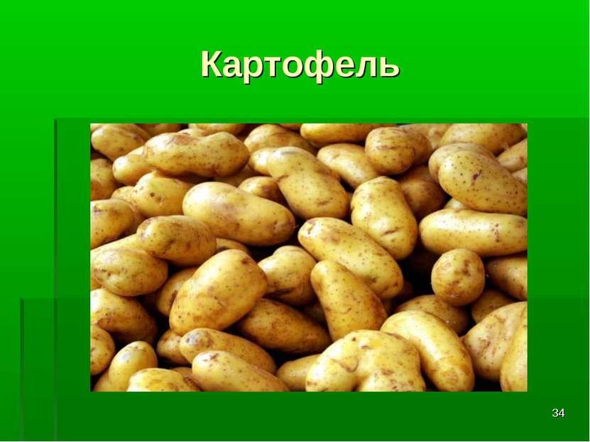 * Картофель