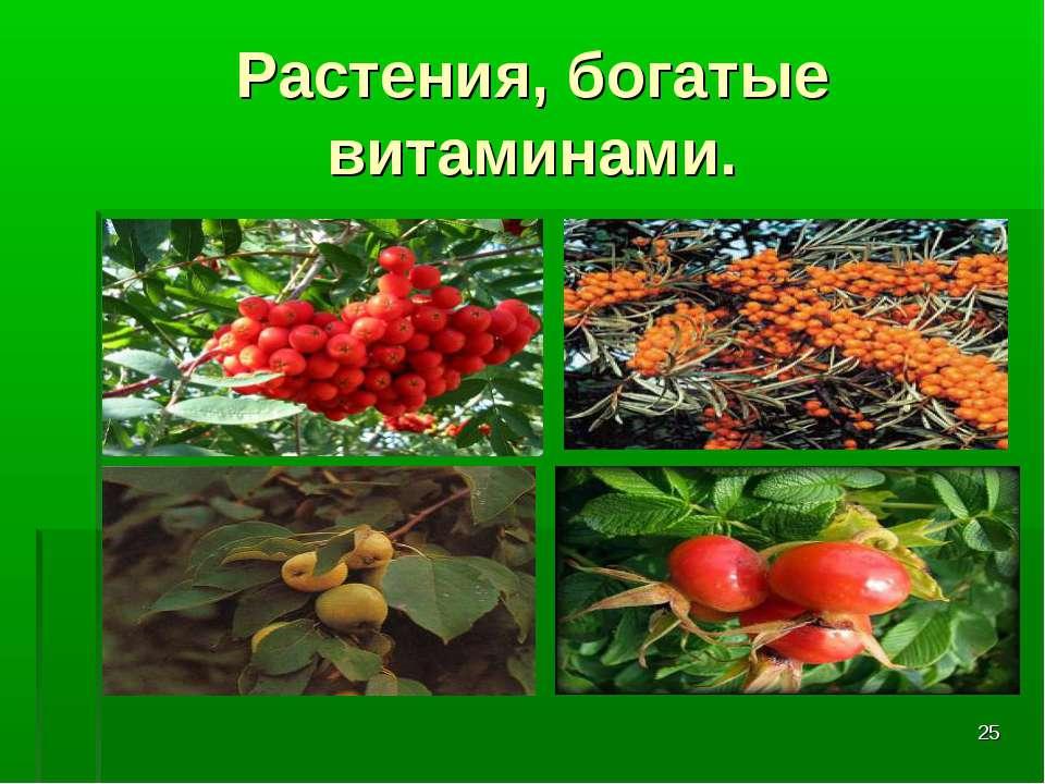 * Растения, богатые витаминами.