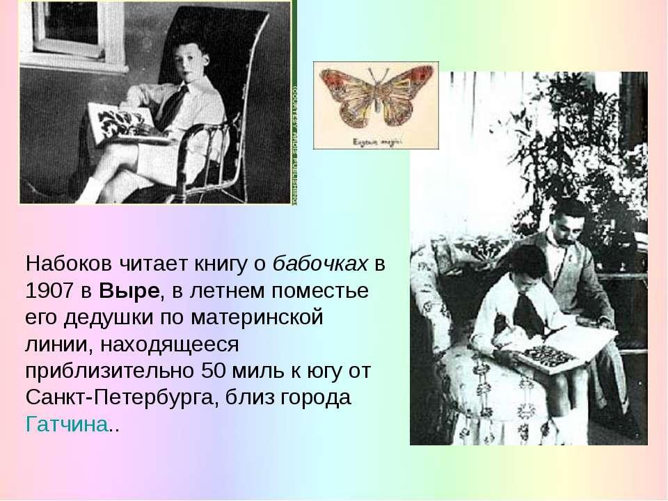 Набоков читает книгу о бабочках в 1907 в Выре, в летнем поместье его дедушки ...