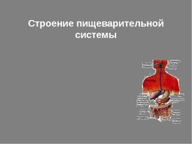 Строение пищеварительной системы