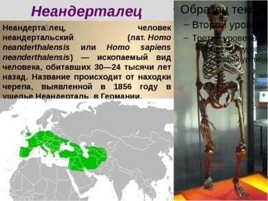 Неандерта лец, человек неандертальский (лат.Homo neanderthalensis или Homo s...