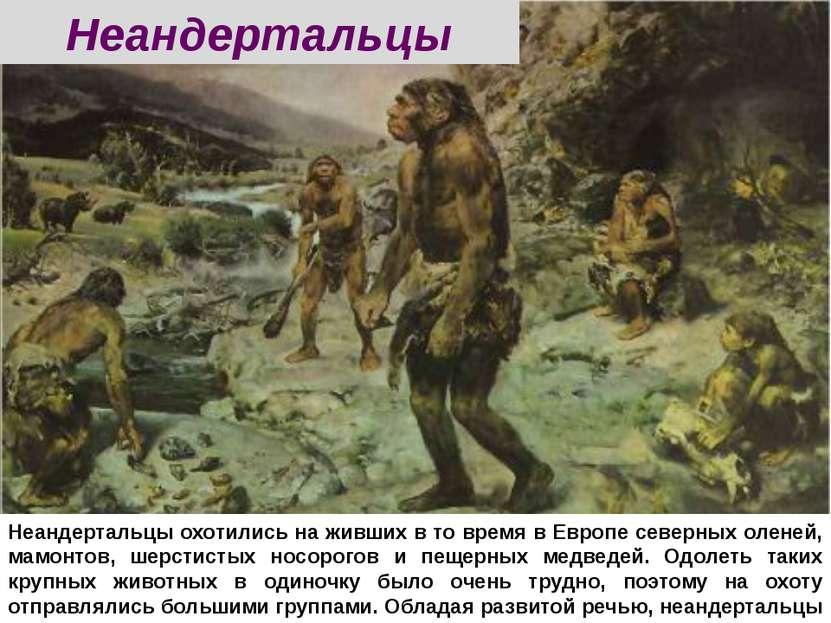 Неандертальцы охотились на живших в то время в Европе северных оленей, мамонт...