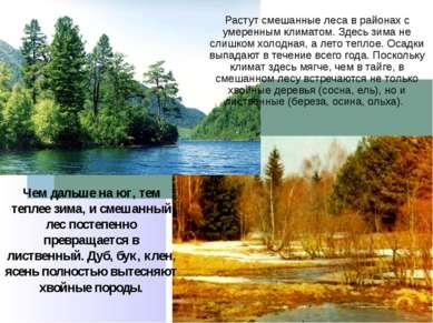 Растут смешанные леса в районах с умеренным климатом. Здесь зима не слишком х...