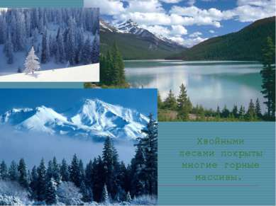 Хвойными лесами покрыты многие горные массивы.