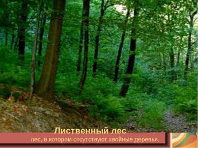 Лиственный лес — лес, в котором отсутствуют хвойные деревья.