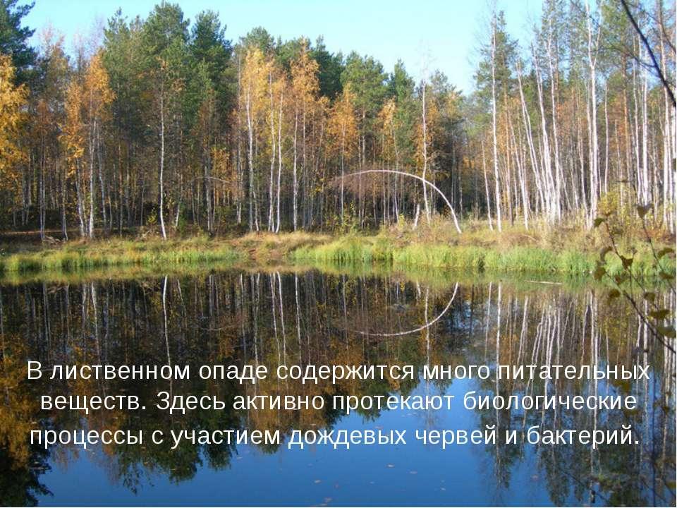 В лиственном опаде содержится много питательных веществ. Здесь активно протек...