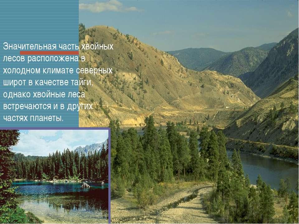 Значительная часть хвойных лесов расположена в холодном климате северных широ...