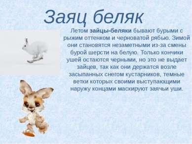 Заяц беляк Летомзайцы-белякибывают бурыми с рыжим оттенком и черноватой ряб...