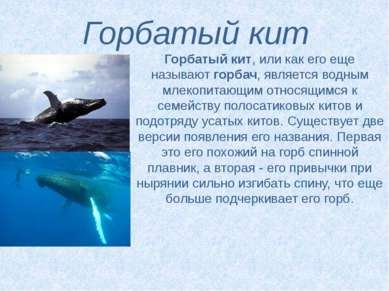 Горбатый кит Горбатый кит, или как его еще называютгорбач, является водным м...