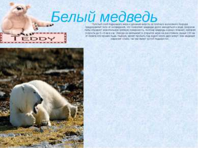 Белый медведь Толстый слой подкожного жира и длинная шерсть из плотного волос...