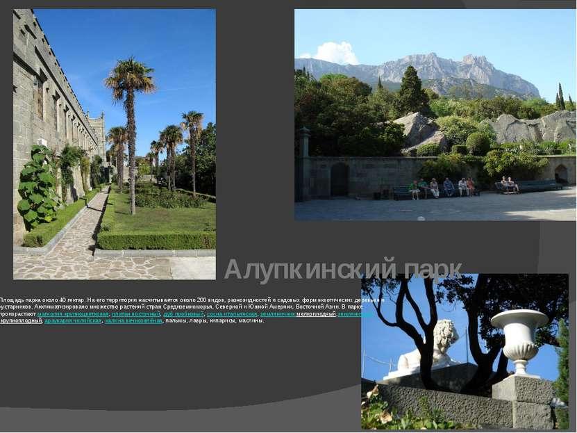 Алупкинский парк Площадь парка около 40 гектар. На его территории насчитывает...